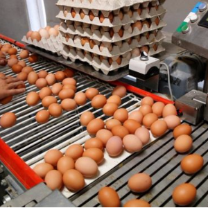 Tainted eggs scandal spreads to France
