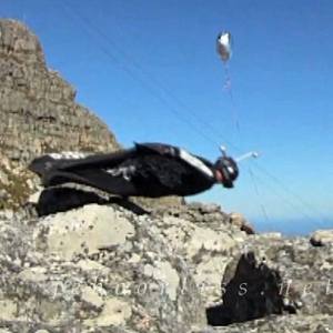 Two dead in Table Mountain climb accident