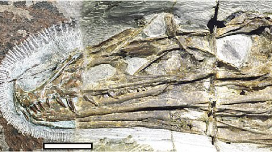 Chinese 'rainbow dinosaur' discovered